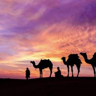 chameau-dans-le-désert